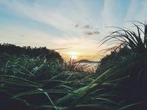 Zonsondergangmening van heuvel stock foto