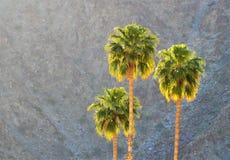 Zonsondergangpalmen Stock Afbeeldingen