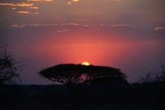 Zonsondergangsafari Tanzania Stock Foto's