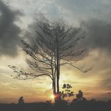 zonsondergangsamarinda Stock Afbeeldingen
