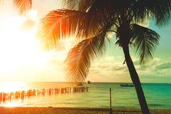 Zonsondergangstrand met palmen en mooie hemel stock afbeelding
