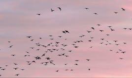 Zonsondergangvogels royalty-vrije stock afbeeldingen