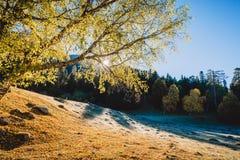Zonsopgang achter boom in het bos met hemel en bergen Royalty-vrije Stock Afbeeldingen