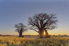 Zonsopgang bij Baines-Baobabkampeerterrein Royalty-vrije Stock Afbeelding