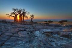 Zonsopgang bij de Baobabs stock afbeelding