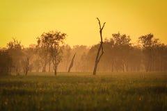 Zonsopgang bij gele wateren, Nationaal Park Kakadu, Stock Afbeelding