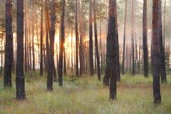 Zonsopgang bij het bos Royalty-vrije Stock Foto's