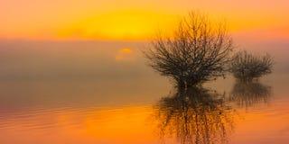 Zonsopgang bij het meer in mist royalty-vrije stock foto's