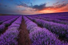 Zonsopgang bij lavendelgebied dichtbij de stad van Burgas, Bulgarije royalty-vrije stock fotografie