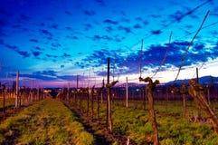 Zonsopgang bij wijngaard Stock Foto
