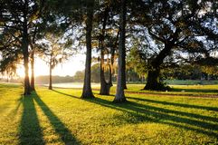 Zonsopgang, bomen en gras stock afbeelding
