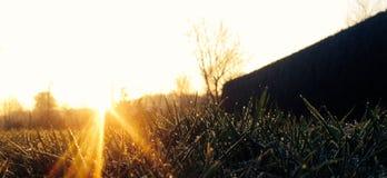 Zonsopgang boven het gras Stock Foto's
