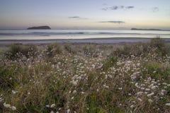 Zonsopgang in Coromandel, Nieuw Zeeland Stock Afbeeldingen