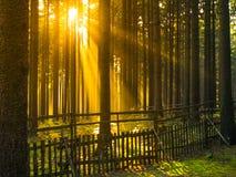 Zonsopgang in de boszonstralen die door bomen en ochtendmist glanzen Stock Afbeelding