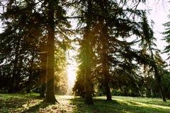 Zonsopgang in de herfstbos stock afbeelding