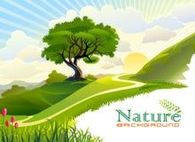 Zonsopgang in de heuvels en de eenzame boom Stock Afbeelding