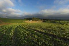 Zonsopgang in de Landbouwgrond Royalty-vrije Stock Foto's