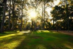 Zonsopgang in de Lente Forest Trees Aardhout Mooie ochtendscène Stock Afbeeldingen