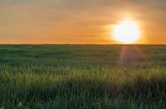 Zonsopgang in de lentetijd op het grasgebied stock afbeeldingen