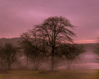 Zonsopgang in de mist stock afbeelding