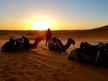 Zonsopgang in de Sahara stock fotografie