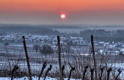 Zonsopgang in de wijngaarden Royalty-vrije Stock Fotografie