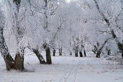 Zonsopgang in de winter Stock Fotografie