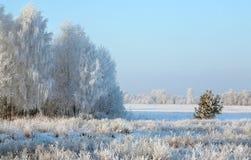 Zonsopgang in de winter Royalty-vrije Stock Afbeeldingen
