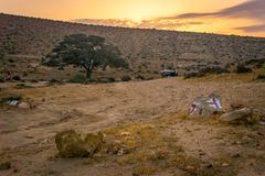 Zonsopgang in de woestijn met een eenzame Acaciaboom stock afbeeldingen