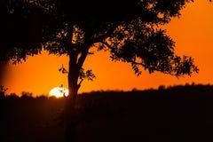 Zonsopgang dichtbij Kruger-Park Stock Foto