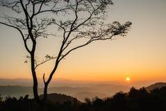 Zonsopgang en eenzame boom Royalty-vrije Stock Afbeelding