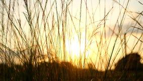 Zonsopgang en gras in aard Stock Afbeelding