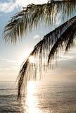 Zonsopgang en palm Royalty-vrije Stock Foto's