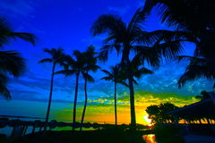 Zonsopgang en Palmen Stock Afbeeldingen