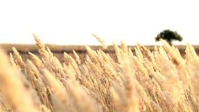 Zonsopgang in The Field stock videobeelden