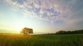 Zonsopgang in Groene Weide met Zes Pijnbomen stock videobeelden