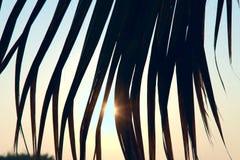 Zonsopgang Het bekijken de zon door de bladeren van palmen stock foto's