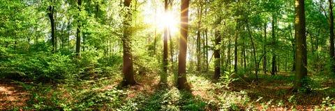 Zonsopgang in het bos Stock Foto