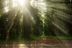 Zonsopgang in het bos Royalty-vrije Stock Foto