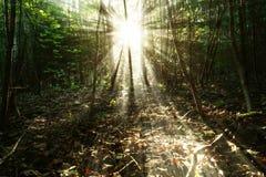Zonsopgang in het bos Royalty-vrije Stock Fotografie
