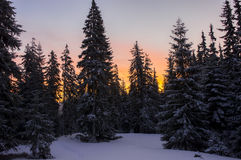 Zonsopgang in het bos de winterlandschap Stock Fotografie