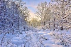 Zonsopgang in het de winterbos stock afbeelding