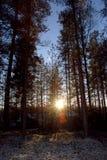 Zonsopgang in het de winterbos (Finland) stock afbeelding