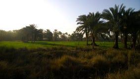 Zonsopgang in het Iraakse platteland Royalty-vrije Stock Foto's