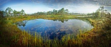 Zonsopgang in het moeras Ijzig koud moeras Ijzige grond Moerasmeer en aard De vorsttemperaturen leggen binnen vast Muskeg natuurl Royalty-vrije Stock Afbeeldingen