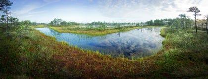 Zonsopgang in het moeras Ijzig koud moeras Ijzige grond Moerasmeer en aard De vorsttemperaturen leggen binnen vast Muskeg natuurl Stock Fotografie
