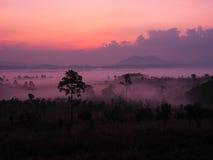 Zonsopgang in landschap met mist bij de Nationale Pa van Thung Salaeng Luang Stock Fotografie