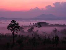 Zonsopgang in landschap met mist bij de Nationale Pa van Thung Salaeng Luang Stock Foto