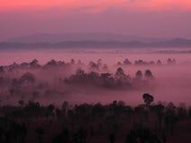Zonsopgang in landschap met mist bij de Nationale Pa van Thung Salaeng Luang Stock Afbeeldingen