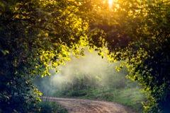 Zonsopgang lichte aard en mist stock foto's